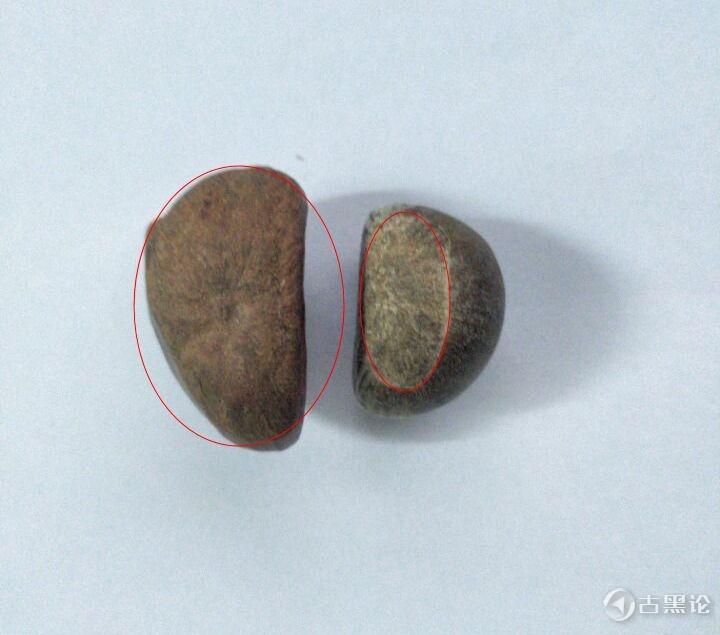 板栗很难剥内皮,粘皮怎么办? 大板栗和小板栗-菜栗子.jpg