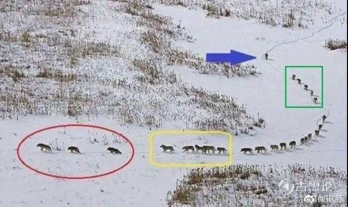 狼的组织能力 IMG_20200529_214623_598.jpg